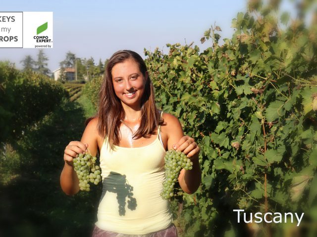 International Vine & Wine Programme – Tuscany 10-12.09.2018